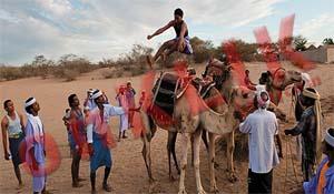 Lompat Onta yang Unik di Yaman